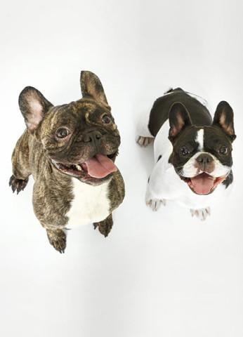 mascotas7_Gomel