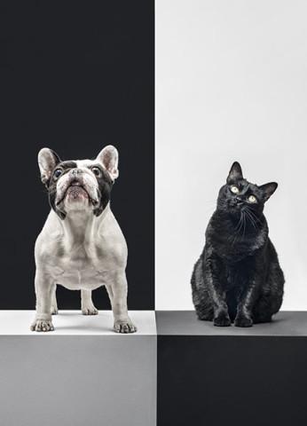 mascotas9_Gomel